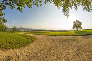 landscape with way, meadow, tree and view to the German highlands Swabian Alb