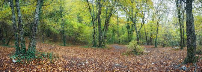 Осенний лес на Кавказе,Краснодарский край, Россияя
