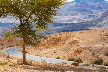 Morning In Desert