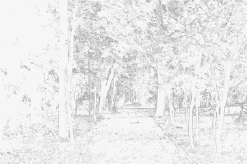 Vector illustration of a park landscape in black and white tones