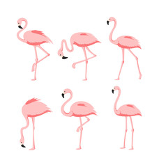 Canvas Prints Flamingo Vector Illustration set of Beautiful elegant pink flamingos in different poses on white background, exotic tropical birds for summer concept in flat cartoon style.
