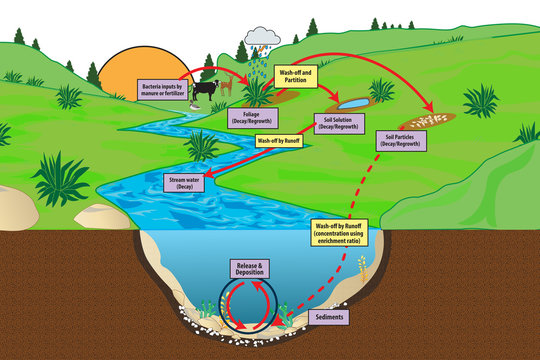 natural decay cycle of bacteria inputs by manure or fartilizer foilage sand regrowth wash off run off stream water release sediment river rain partition particle