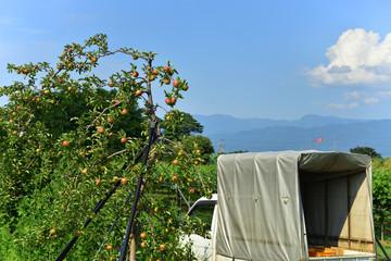 松本市郊外の林檎の木とトラック
