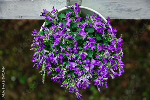 Pot De Fleur Mauve Dans Le Jardin Stock Photo And Royalty Free