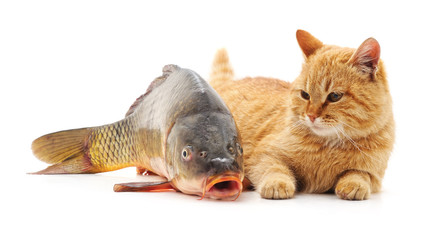 Cat and big fish.