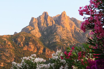 Mountain tops colouring orange in the evening light at sunset with white and pink bougainvillea flowers in front, Porto, Corsica, France