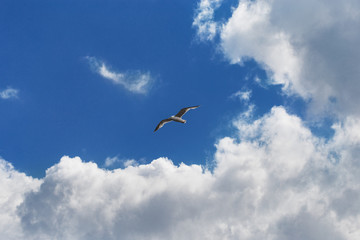 Seagull flying among the curly clouds in a sunny sky