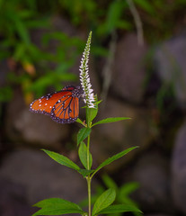 isolated macro image of fancy butterfly