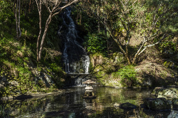 Japanese Garden Pond, Wellington Botanic Gardens, New Zealand.