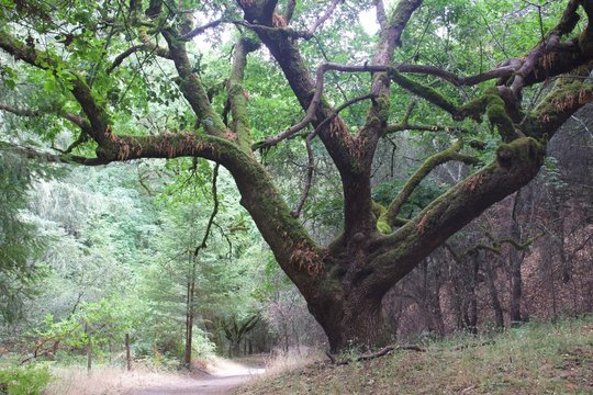 Shiloh Ranch Regional Park, California