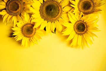 Beautiful sunflowers on yellow background. Yellow flower. Holiday harvest concept