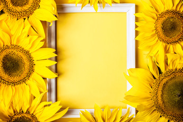 Frame of yellow sunflowers on yellow background. Holiday harvest concept