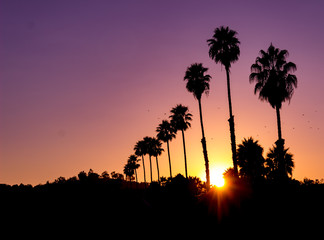 Incredible horizontal view of a vivid sunset with sunburst and silhouette of palm trees