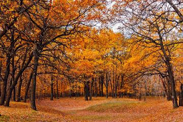 Garden Poster yellow autumn forest