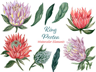 Botanical collage with King protea and green leaves branches elements set