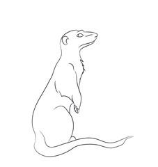 meerkaty lines, vector