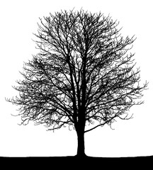 Black tree on white.