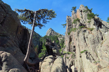 Wonderful rocks and trees on the hike to Trou de la Bombe near the Bavella mountains, Corsica, France