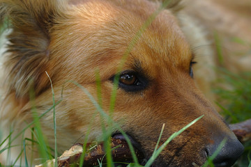 Portrait of a cute dog lying on a green meadow in the summer