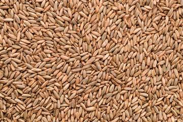 Natural rye grains background