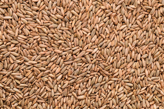 Natural rye grains background