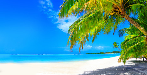 Foto op Canvas Palm boom Dream beach with palm trees on white sand and turquoise ocean