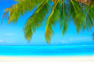 Photo sur Plexiglas Plage Dream beach with palm trees on white sand and turquoise ocean