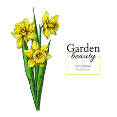 Daffodil flower and leaves bouquet drawing. Vector hand drawn floral set.