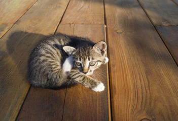 A small tabby cat is sitting on wooden boards. The kitten lies stretched out.
