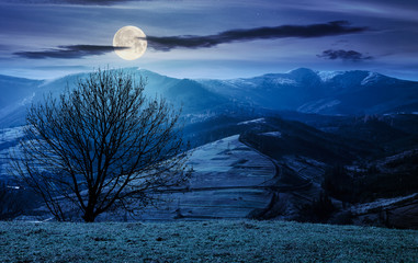 naked tree on the grassy hill at night in full moon light. mountain ridge with snowy tops in the distance. fine autumn weather