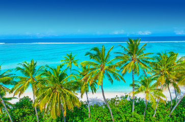 Wall Mural - Palm trees on the sandy beach and turquoise ocean from above