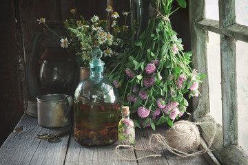 Clover tincture or infusion, essential oil bottle and medicinal herbs bunches near window inside the retro village house. Herbal medicine.