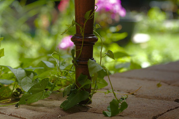 Chair leg with a tendril in a beautiful arrangement