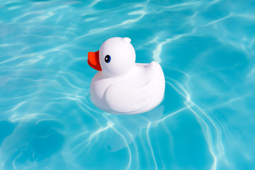 A single white rubber duck alone in the paddling pool