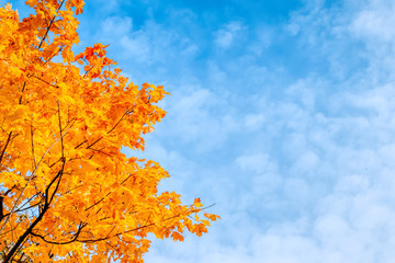 Colorful autumn leaves on a blue sky
