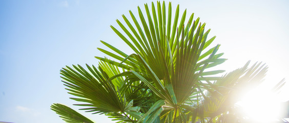 Tropical background Palm leaves Bright sunny colors Copy space Selective focus Banner