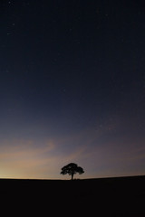 Tree Night Sky
