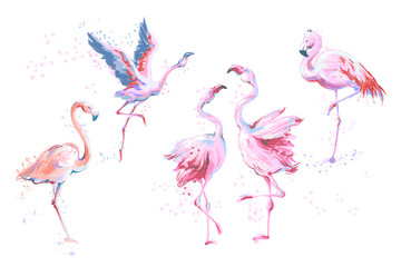 Set of 5 vector watercolor imitation style sketchy flamingos isolated on white. Vector illustration of pink flamingo