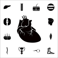 real image of the human heart icon. Detailed set of Human parts icons. Premium quality graphic design sign. One of the collection icons for websites, web design, mobile app