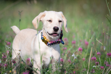 Cute puppy with bow tie posing for a photo