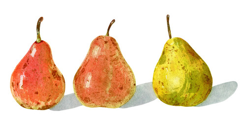 Hand drawn watercolor botanical painting of three pears with shadow isolated on white background.