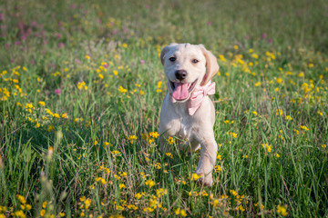 Puppy on the flowery meadow