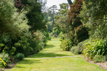 Nature scene in the San Francisco Botanical Garden