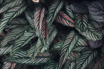 Dark faded green leaves pattern background