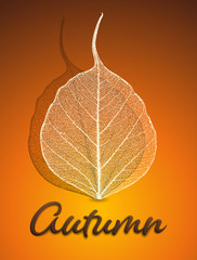 Vector illustration - autumn background with skeleton leaves. EPS 10