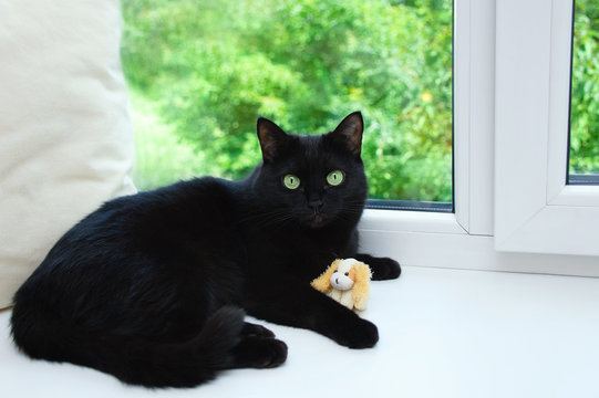 A black cat is lying on a window sill near a window with a soft toy.