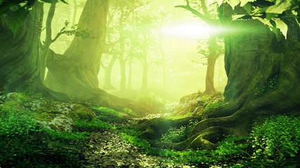 La pose en embrasure Jaune de seuffre path through magical forest at sunrise, beautiful old trees fantasy landscape
