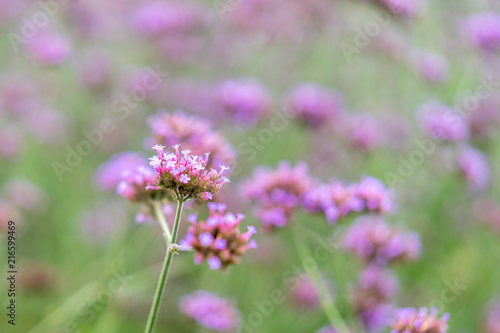 Beautiful Little Purple Flowers Background And Wallpaper Violet