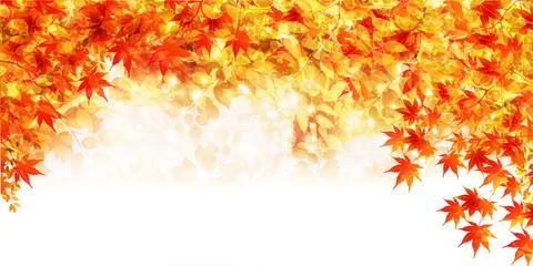 紅葉 もみじ 秋 背景