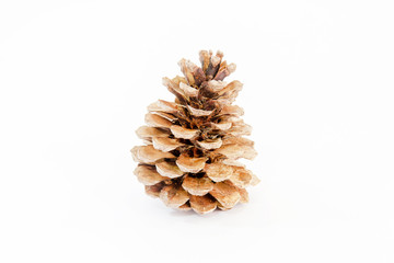 Pine cone white background